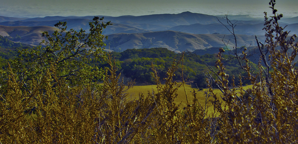 This is a decorative image of rolling blue hills in the background and bright yellow foliage in the foreground.
